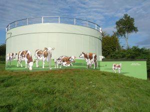 Vaches - Résenlieu (61)